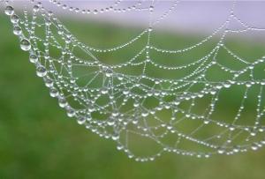 Zirnekļu tīkls