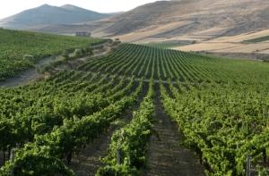 Vīna lauki Sardīnijā