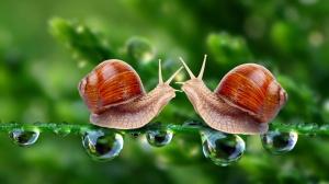 snail_love-1920x1080
